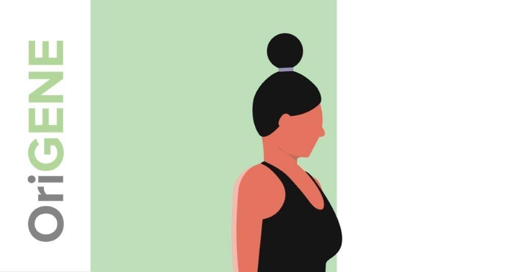 Nekoefening 5: de chintuck