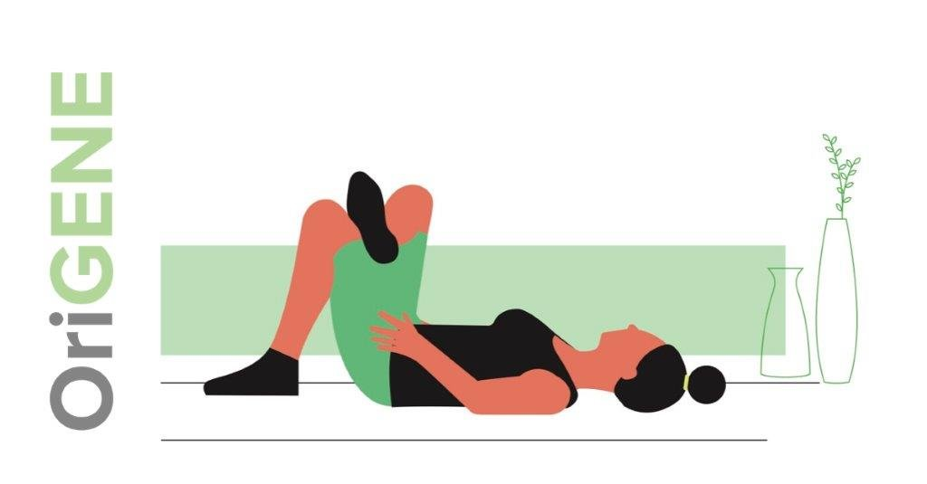 Rugoefening 3: de liggende zit